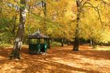 autumn in park - 229194349