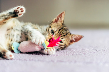 Cute Baby Cat Playing At Home