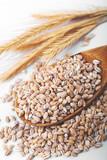 pearl barley in wooden spoon - 229216572