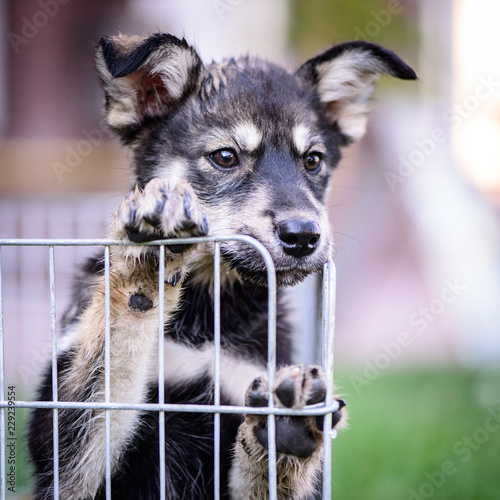 puppy behind the fence outdoor - 229239554