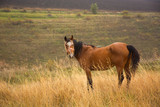 Horse in field grazes on hill background at sunny day