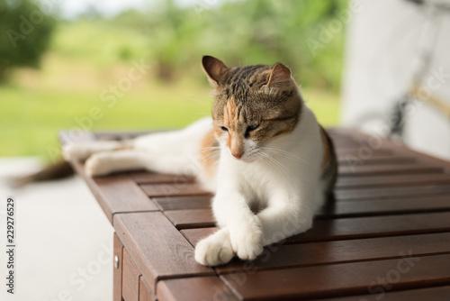 little cat doze - 229276529