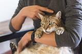 fat tabby cat - 229277106