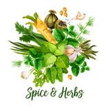 Vector spice, herbs and seasonings - 229301566