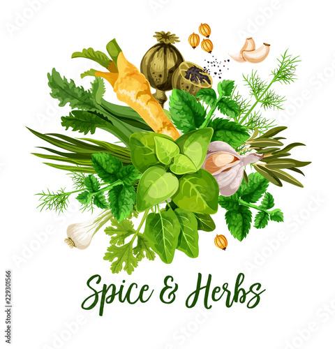 Vector spice, herbs and seasonings