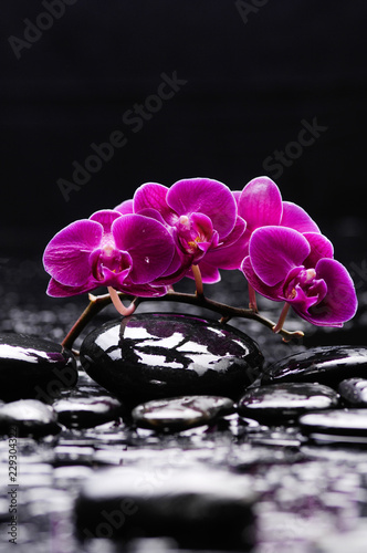 Lying on red branch orchid and black stones