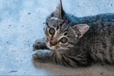 Small adorable kitten looking into the camera while lying on the concrete floor