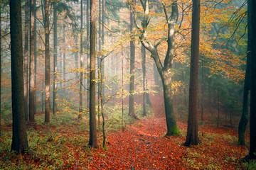Sunny colorful autumn season fairytale forest landscape. © robsonphoto