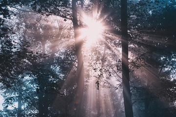 Beautiful red blue colored shiny sun rays through forest. © robsonphoto