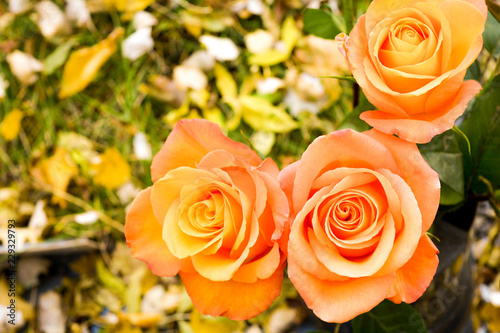 Leinwanddruck Bild Bouquet of orange rose flowers, autumn fallen leaves on ground