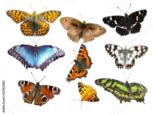 Viele Schmetterlingsarten isoliert - 229330162