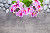 Beauty orchid on a gray background. Spa scene. - 229332165