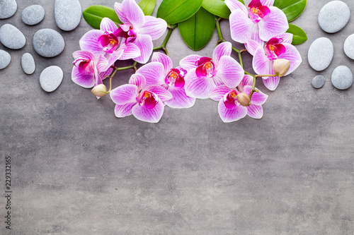 Poster Beauty orchid on a gray background. Spa scene.