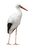 isolated on white stork