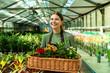 Leinwandbild Motiv Image of brunette woman gardener 20s wearing apron carrying basket with plants, while working in greenhouse