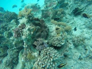 snorkeling, ile de Mnemba, zanzibar