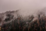 Fog above pine forests. Misty morning view in wet mountain area.  - 229394399