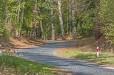 Brukowana droga przez las.