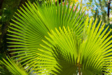 View of the palm branch, Moalboal, Cebu, Philippines. With selective focus.