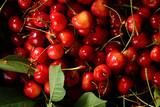 Cherry harvest background