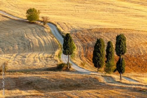 Fototapety, obrazy : Tuscan countryside in summer, near Pienza, Tuscany, Italy