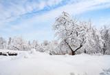 winter garden - 229434199