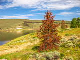 The green pine trees of Colorado in the United States are becoming red. Pine beetles are changing the landscape of Rocky Mountain National Park are killing the trees.