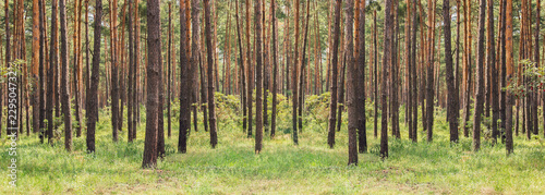 forest - 229504732