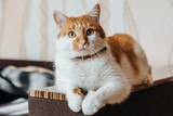 beautiful charismatic red cat