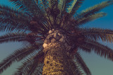 Palm in the evening at sunset, tropical vacation and travel. - 229523107