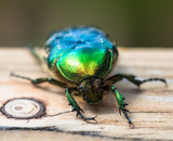 green beetle on a piece of wood