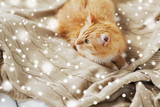pets and hygge concept - red tabby cat lying on blanket at home in winter over snow