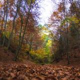 Forest in Autumn, Sulov Rocks (Sulovske Skaly) National Nature Reserve, Slovakia