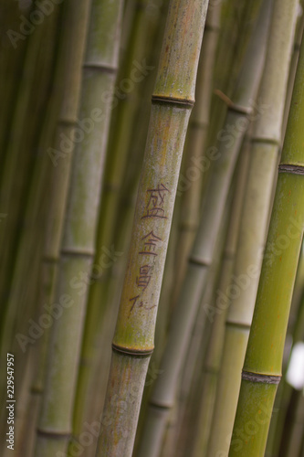 background with green bamboo - 229547957