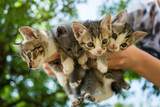 Close up on kittens in hands