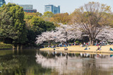 Cherry Blossoms in Tokyo - 229563931