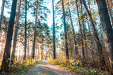 Beautiful forest with different trees - 229571141
