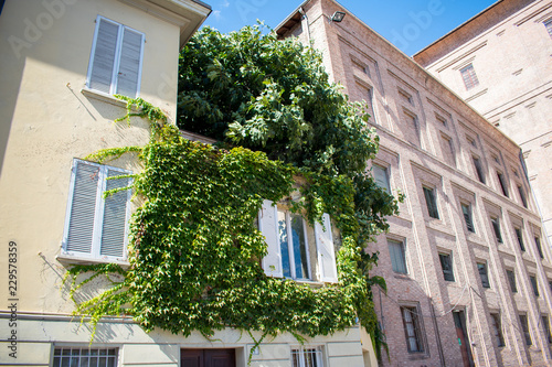 Ivy growing on the facade of a typical Italian building