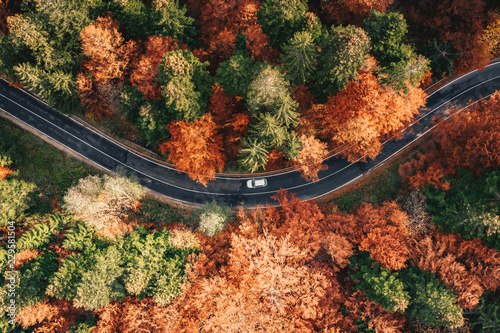Car on the road surrounded by forest in the fall. Carpathian Mountains, Romania - 229581504