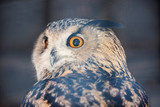 Owl. Owl is a large bird. Despite its size, it flies fast enough and in flight is able to catch up with the crow.