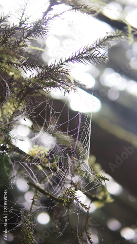 Spider web in the jungle - 229590145