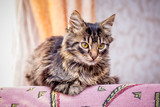 A small striped cat sits by the window_ - 229590767