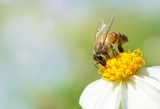 Bee on flower with soft blurred background