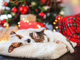 Cat and dog sleeping under christmas tree - 229604924