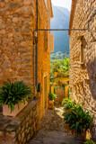 Urlaub, Mallorca, Palmen, Bananen, Wandern, Katze, Kitty, Tiere, Früchte - 229608977
