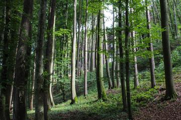 Wald in Niederösterreich, Begleitweg der Ybbsflusses, Österreich © Mathias Danzer