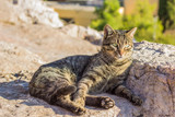 single street cat portrait lay on stones and looking side ways, sunny weather