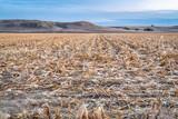 corn field after harvest - 229642949