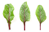 fresh beet leaf isolated on white background. Top view. Flat lay pattern - 229652160