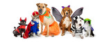 Cats and Dogs in Halloween Costumes Web Banner - 229663141